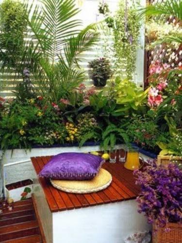 plante in balcon