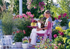 plante si flori pentru un balcon insorit