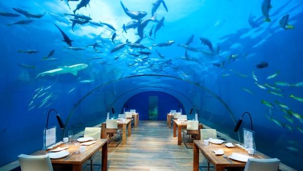 restaurant subacvatic hotel plutitor conrad maldive