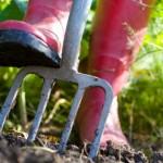 Ce legume pot fi plantate in gradina la inceputul lunii martie