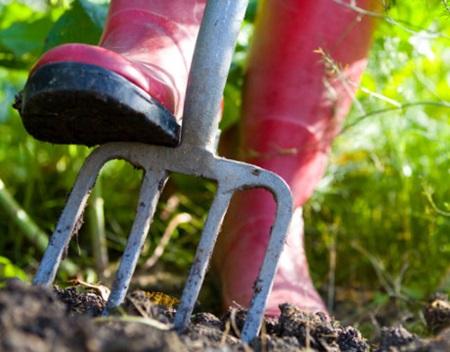 sapatura legume in gradina luna martie