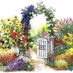 schema 2 pentru decorarea cu flori a unei portite sau a unei pergole cu gard