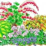 schema 3 combinatii de flori iubitoare de umbra