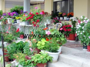 terasa cu flori
