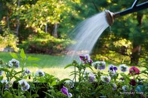 udarea plantelor de gradina