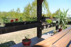 yucca plante pe terasa