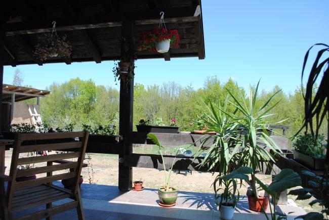 yucca vara pe terasa